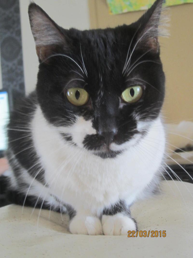 Lolita -  noire et blanche née en 2012 Img_2143