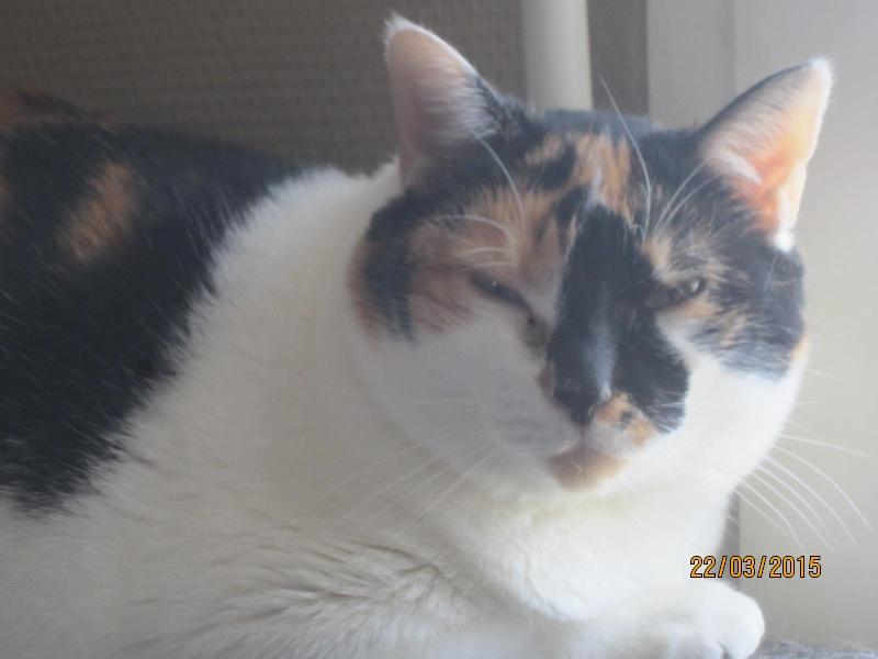 Lola - minette sauvage tricolore est marrainée par Emeline D. Merci ! Img_2154
