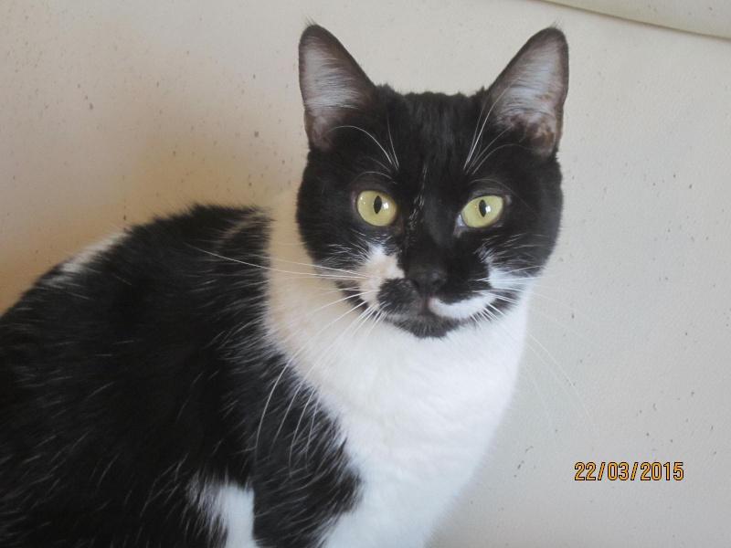 Lolita -  noire et blanche née en 2012 Img_2231