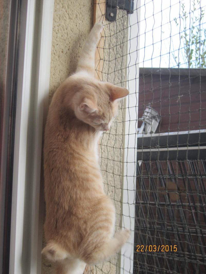 Hamour - Petit coeur trouvé la queue inerte et incapable d'uriner seul est marrainé :) Img_2247