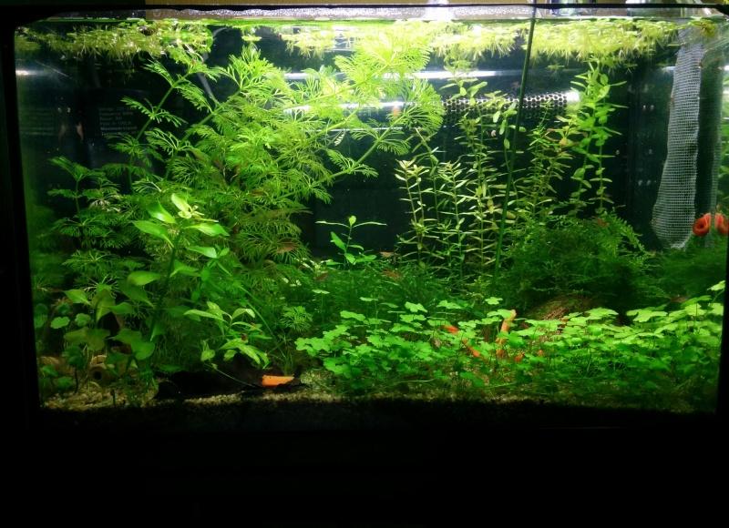 Mon mini bac à plantes Img_2012
