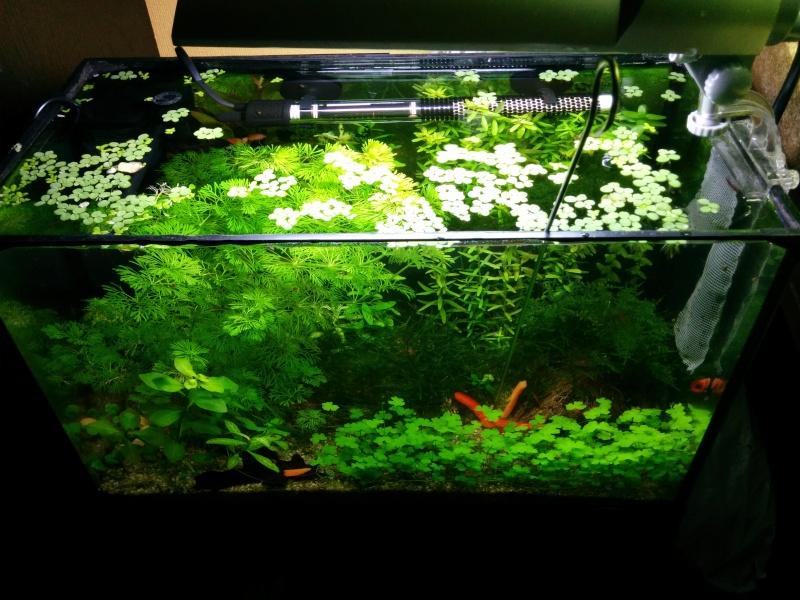 Mon mini bac à plantes Img_2013