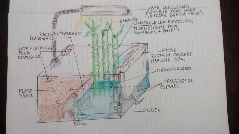 Projet aquaterrarium crabe  11178610