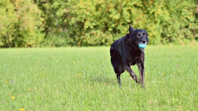 Hund & Hase (: Dsc_0310