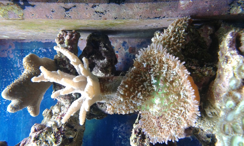 Identification coraux  20150316