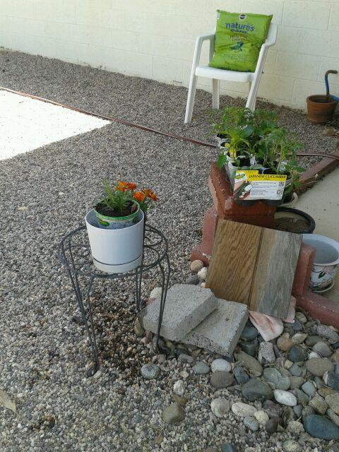 Home Depot Spring Black Friday Sale - $2.00 starter plants Newpur12