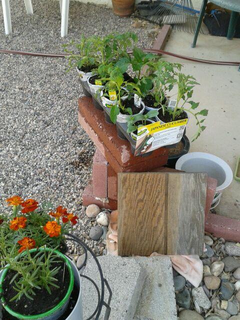 Home Depot Spring Black Friday Sale - $2.00 starter plants Newpur13