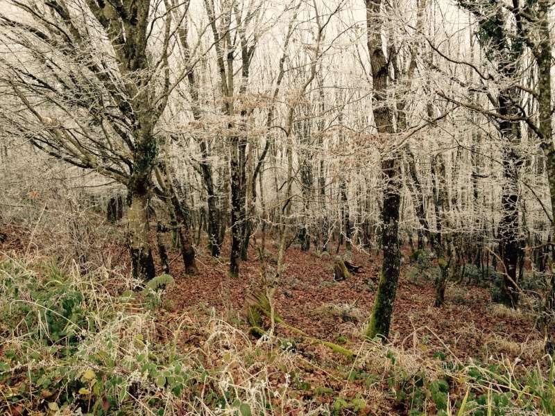Forêt de la Grésigne Image10