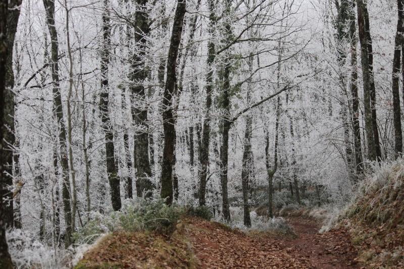 Forêt de la Grésigne Img_0711
