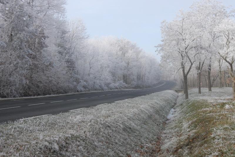 Forêt de la Grésigne Img_0715