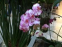 Name der Orchidee Orchid16