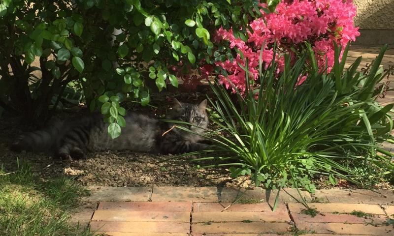 Judie femelle type europénne tigrée grise angora, née le 01/09/14 - Page 3 2015-018