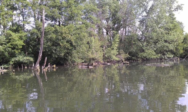 lac de caderousse  Imag0014