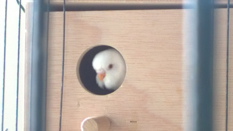 Sorti du nid... Wp_20123