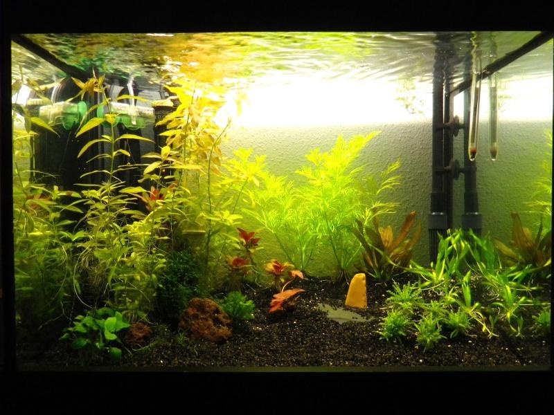 J'ai des vers dans mon aquarium Aquari10