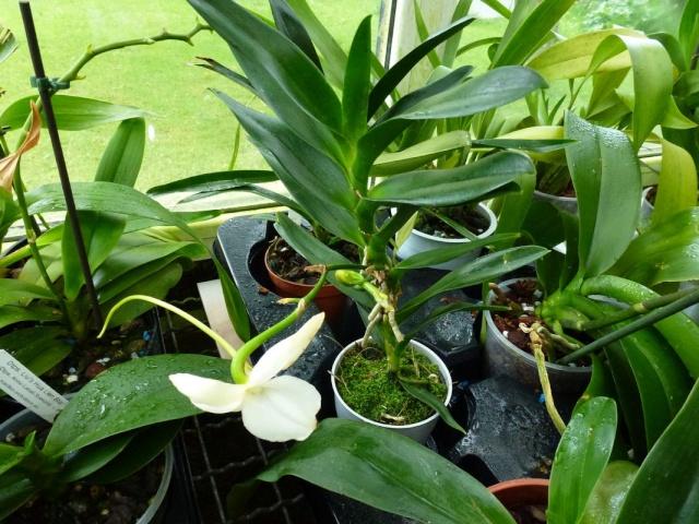 Visite de l'expo salon de l'orchidée à Veigné Angrae12