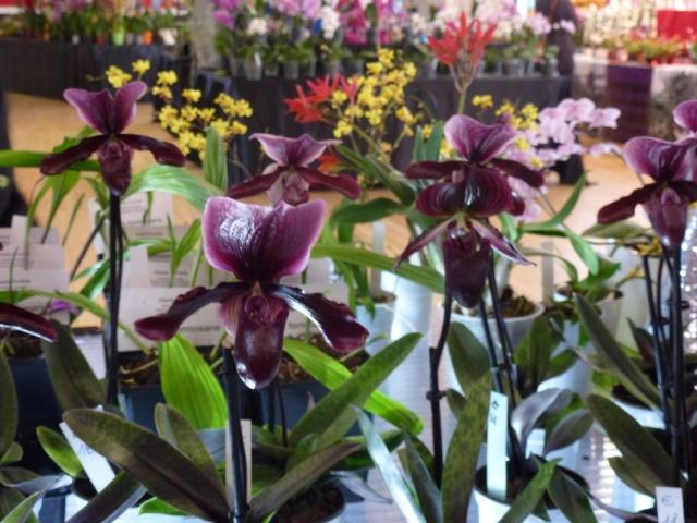 Visite de l'expo salon de l'orchidée à Veigné P1040621