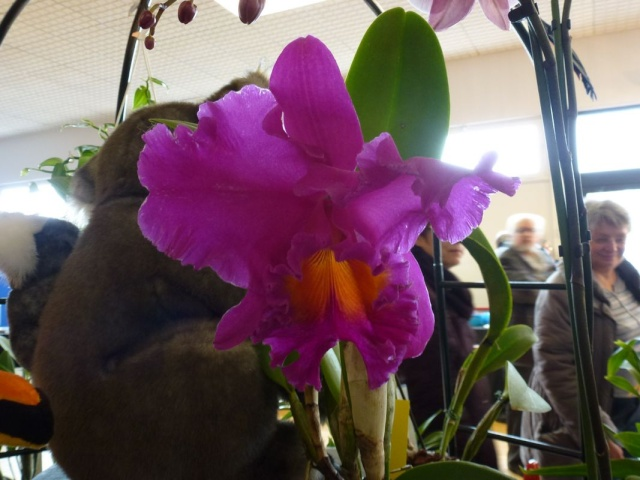 Visite de l'expo salon de l'orchidée à Veigné P1040623