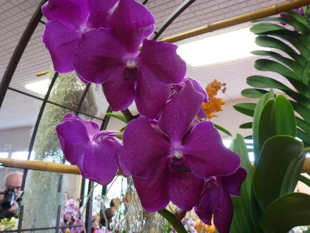 Visite de l'expo salon de l'orchidée à Veigné P1040624