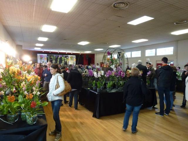 Visite de l'expo salon de l'orchidée à Veigné P1040625