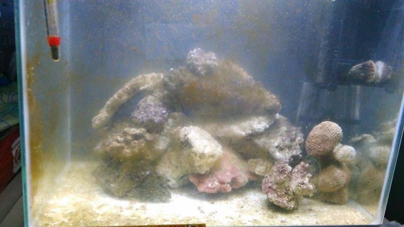 Bac de ReefshannOn -  Sera precision cube60 10407210