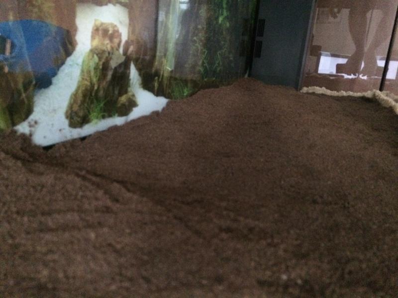 1er aquarium: OBJECTIF Amazonien!!!!!! Img_0217