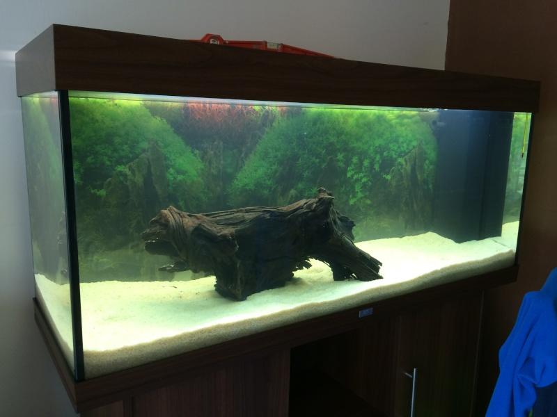 1er aquarium: OBJECTIF Amazonien!!!!!! Img_0223
