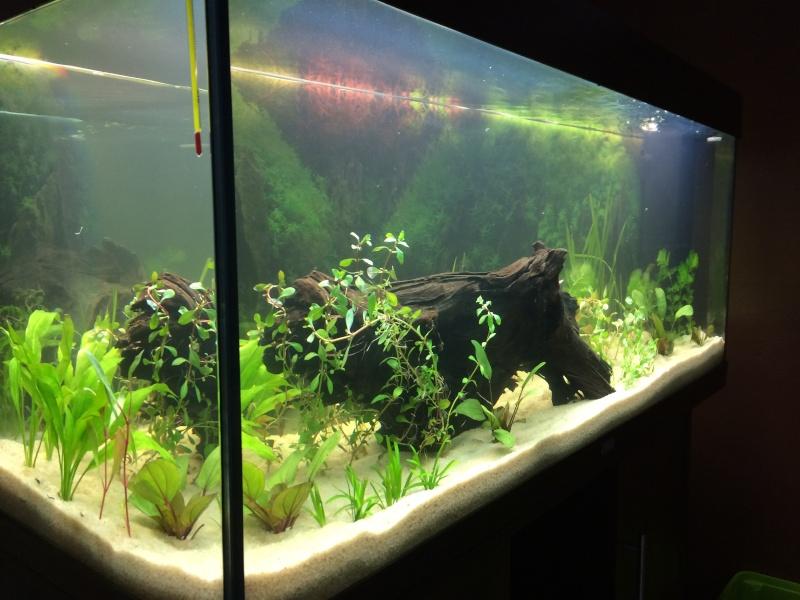 1er aquarium: OBJECTIF Amazonien!!!!!! Img_0226