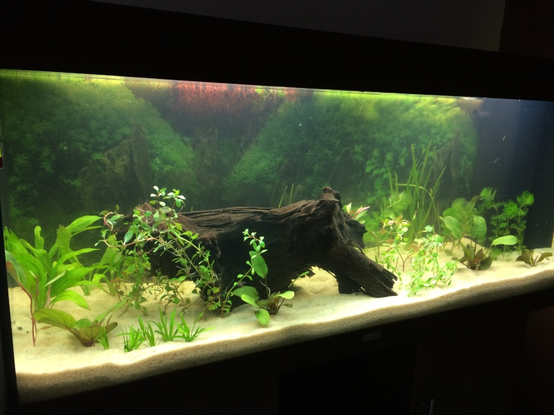 1er aquarium: OBJECTIF Amazonien!!!!!! Img_0227