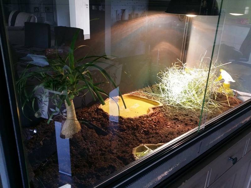 réaménagement du terrarium de dame susu 20150416