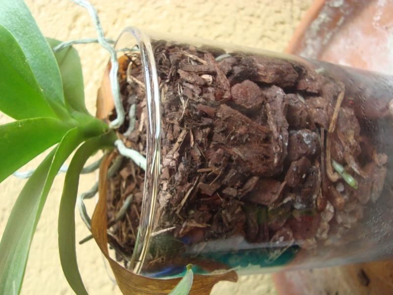 Orchidee in Glasvase 2 - Seite 25 Dsc00413