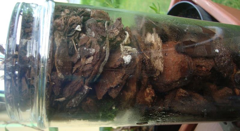 Orchidee in Glasvase 2 - Seite 25 Dsc00416