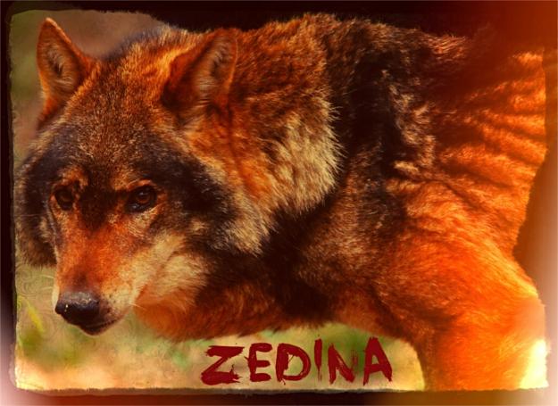 Zedina - Renégats - Libre [Née sur Sarkan] Signat11