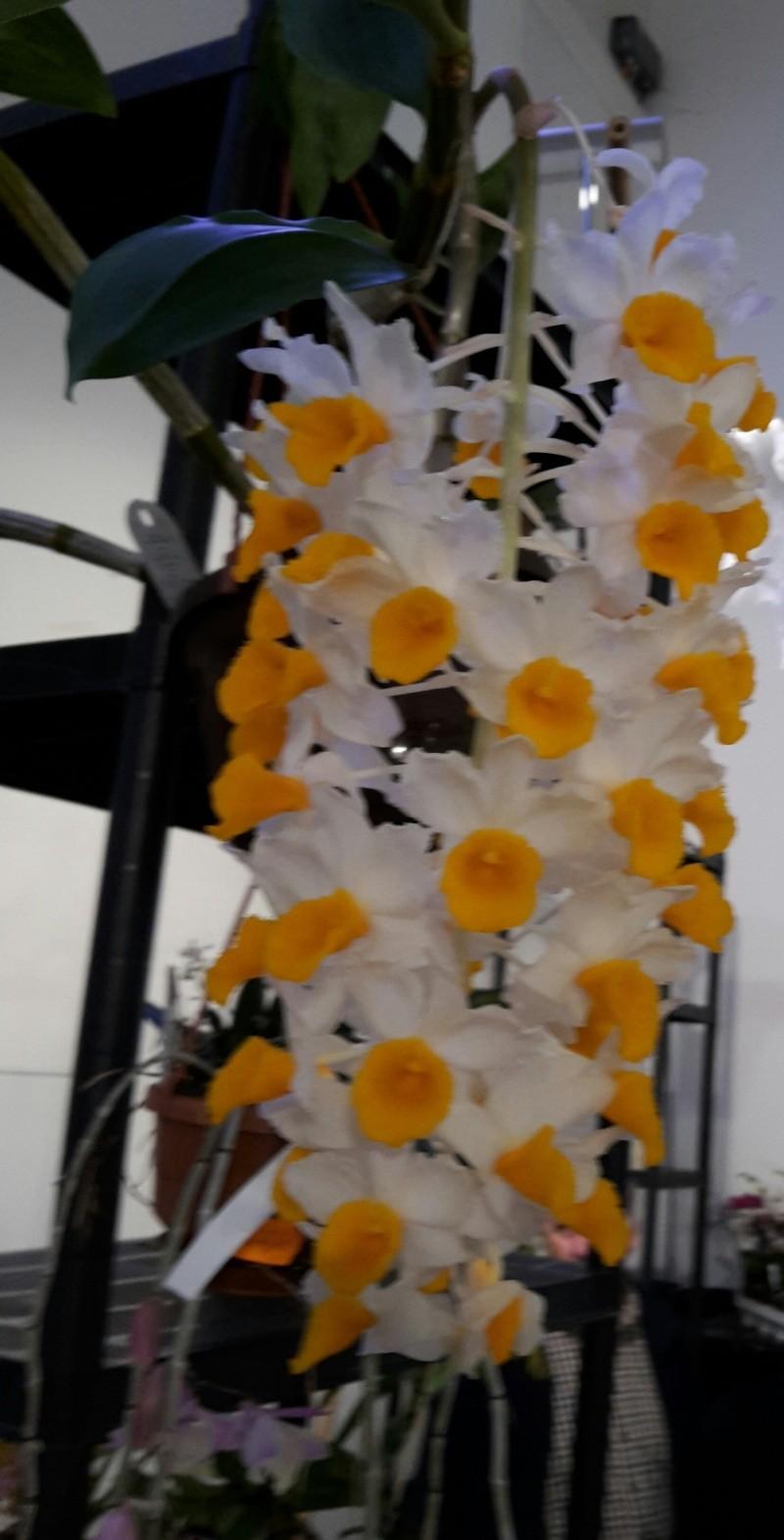 Orchidee auf Messe gesehen, Name aber nicht 2015-011