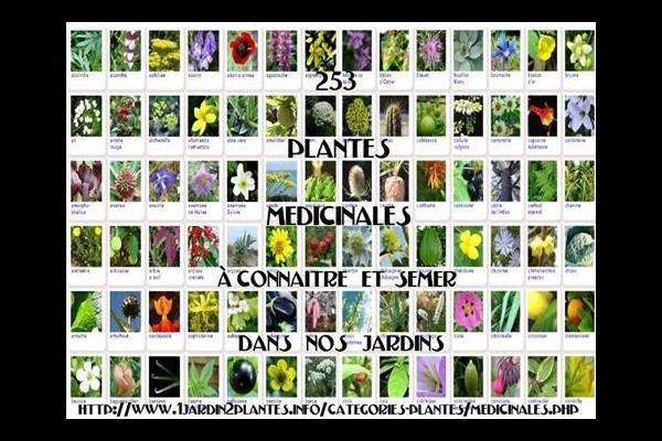 VOICI UNE LISTE DE PLANTES MÉDICINALES 118