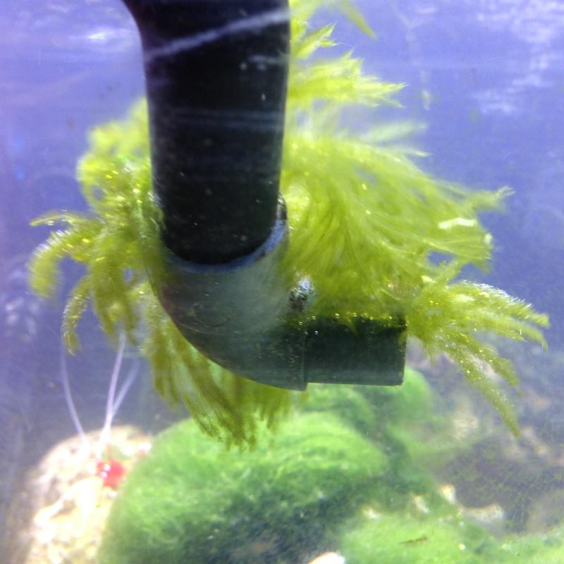 quelles sont les bonnes ou les mauvaises algues ?? Img_0010