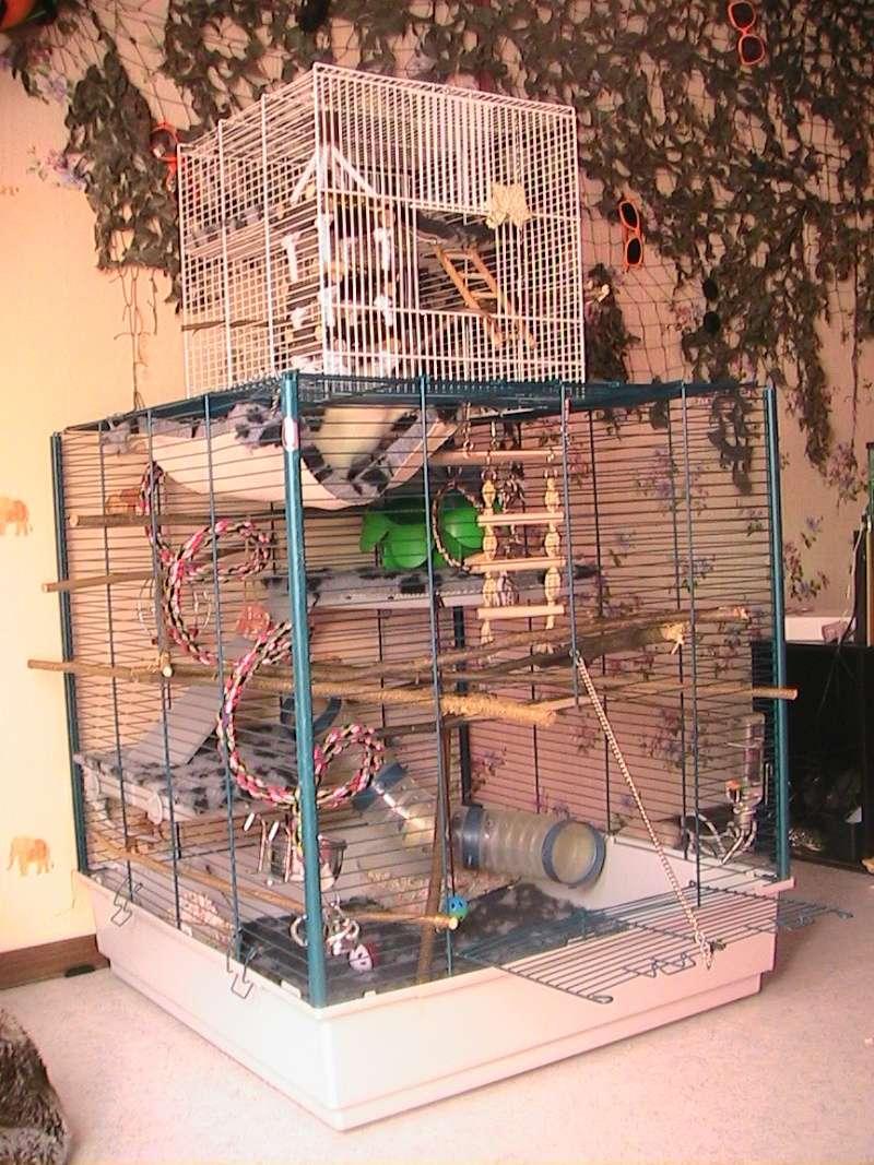 Photos de vos cages - Page 4 Cage14