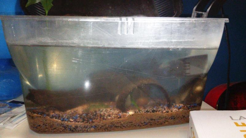 l'aquarium de BluePink Dsc_0029