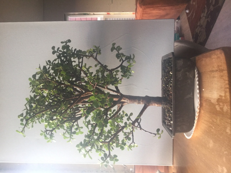 Need help saving a jade tree Image17