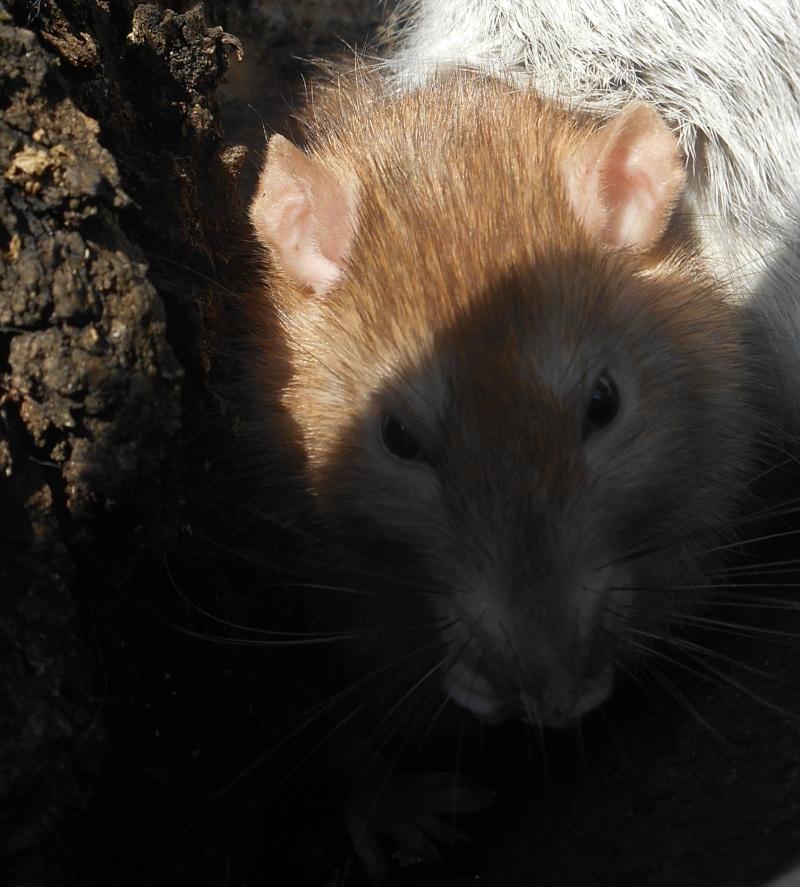 Donne rats Croque13
