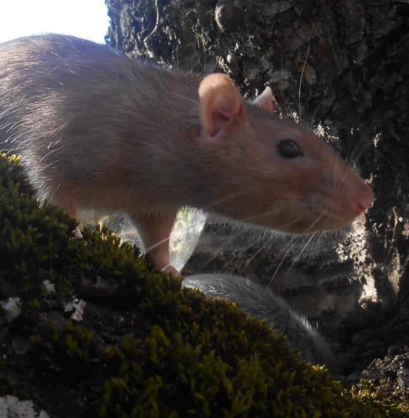 Donne rats Dscn4819