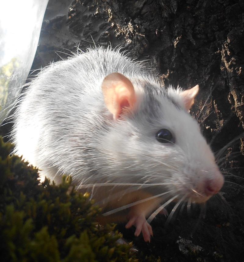 Donne rats Dscn4820