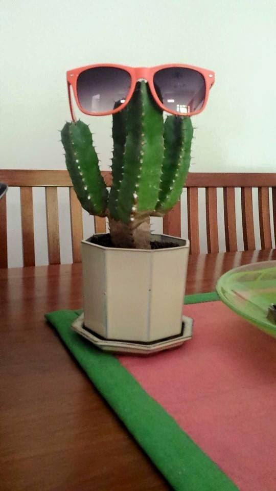 Help with Cactus ID? Senor_12