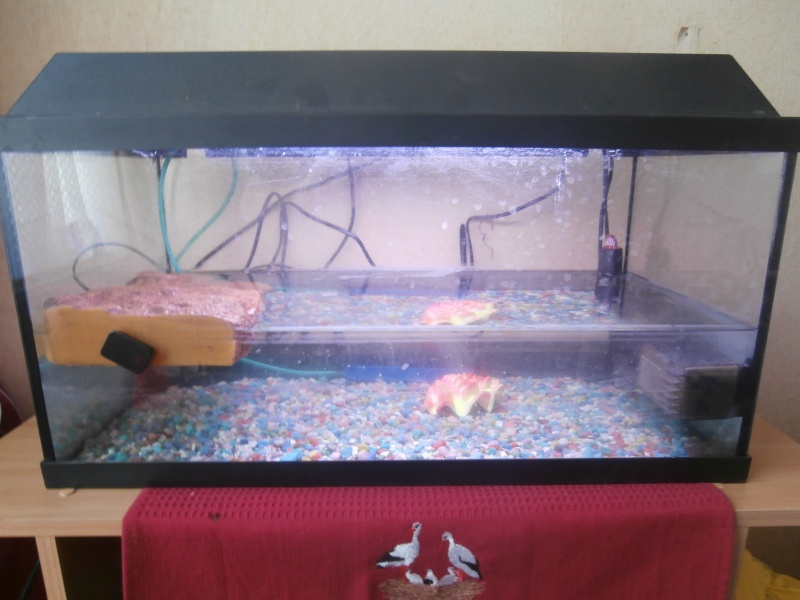 Voici l'aquarium de Totue !!! P4200012