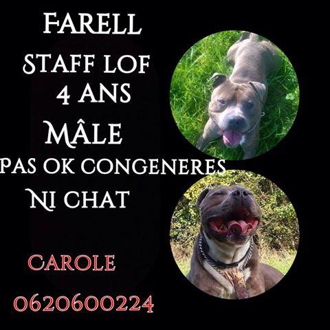 FARELL, mâle staff LOF né le 17/06/2010 Farell12