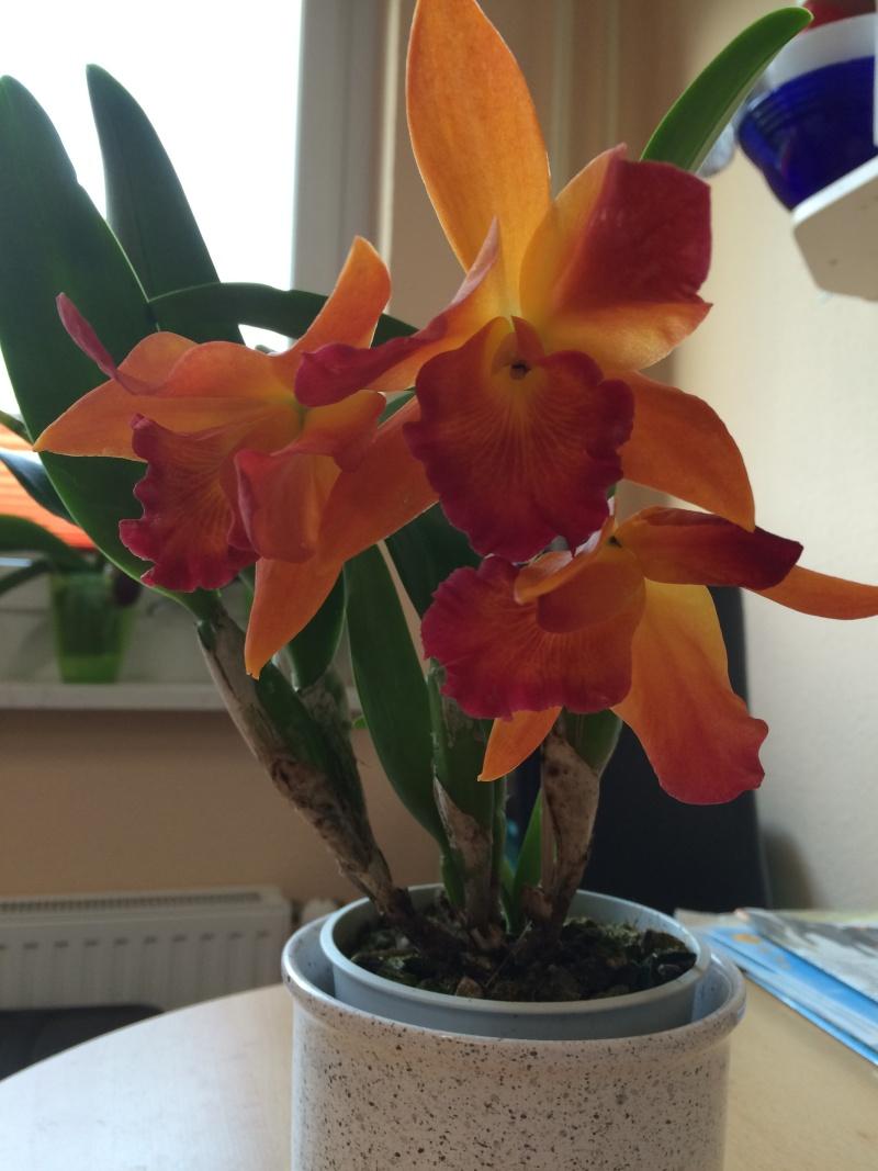 Orchideen-Neuzugang - Seite 4 Img_0013