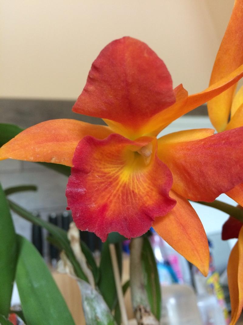 Orchideen-Neuzugang - Seite 4 Img_0014