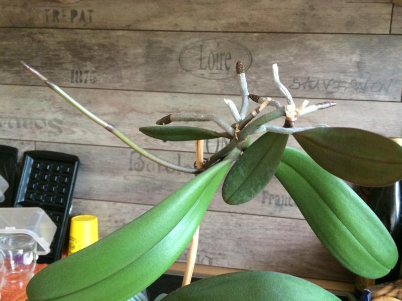Orchideen-Neuzugang - Seite 5 Img_0023