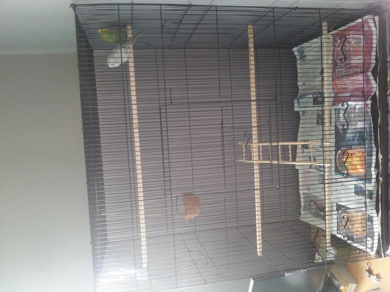 cage faite maison ou leboncoin - Page 3 20150511