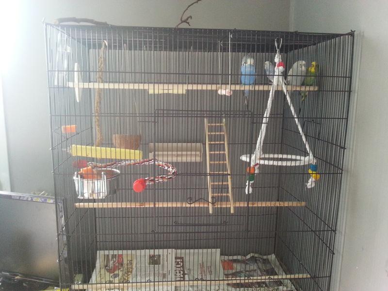 cage faite maison ou leboncoin - Page 4 20150516